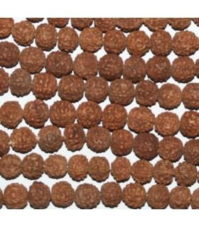 Mala De Semilla Rudraksha Bola 10mm.Hilo 115cm-Ref.8217